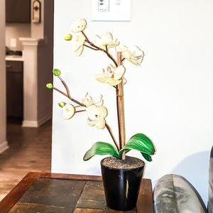 Faux Vanilla Orchid Plant in Ceramic Pottery
